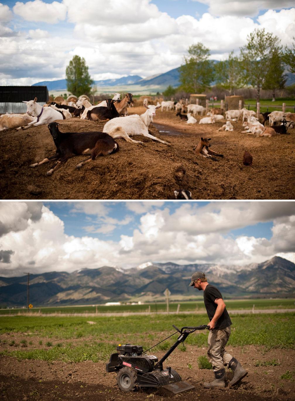 Amalthia-Goats-&-Nate_edited-2