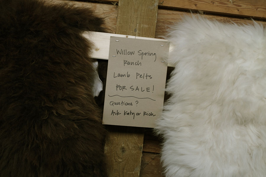 The Harjes' sell lamb pelt as well. Over the years they have found a market for the white wool, but selling the colored wool is more of a challenge. In her free time, Katy has been having fun making felted wool felt rugs that incorporate the natural coloured wools. A local beekeeping club is using some of the head and belly wool to insulate their hives. Another friend of Rich and Katy's is insulating her green house with some of the scrap wool.