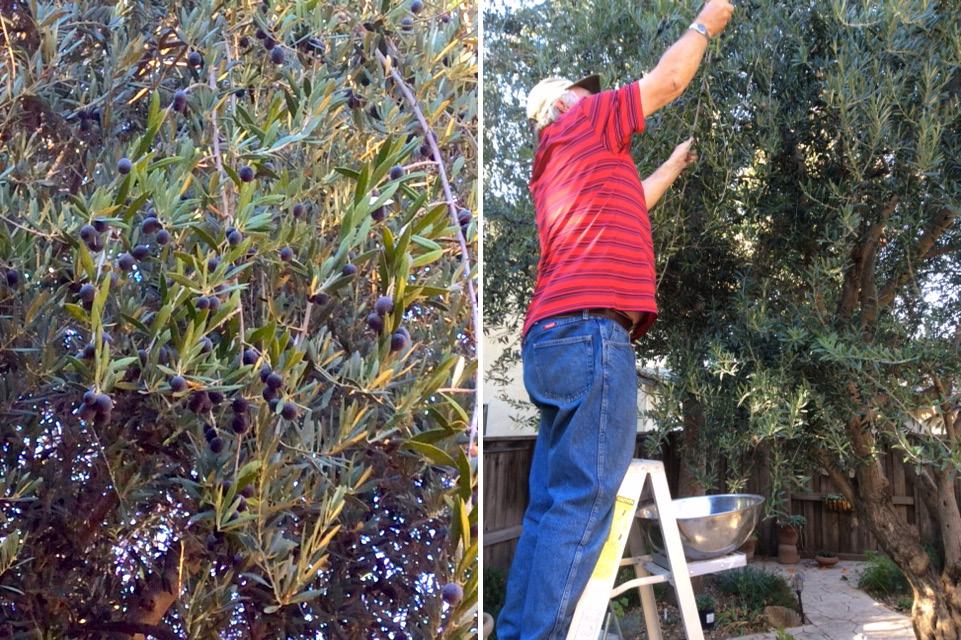 Olives Collage #1
