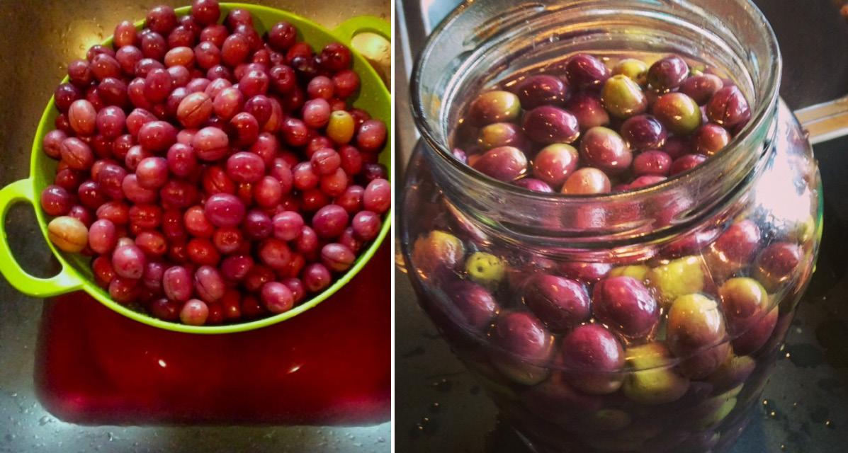 Olives Collage #3