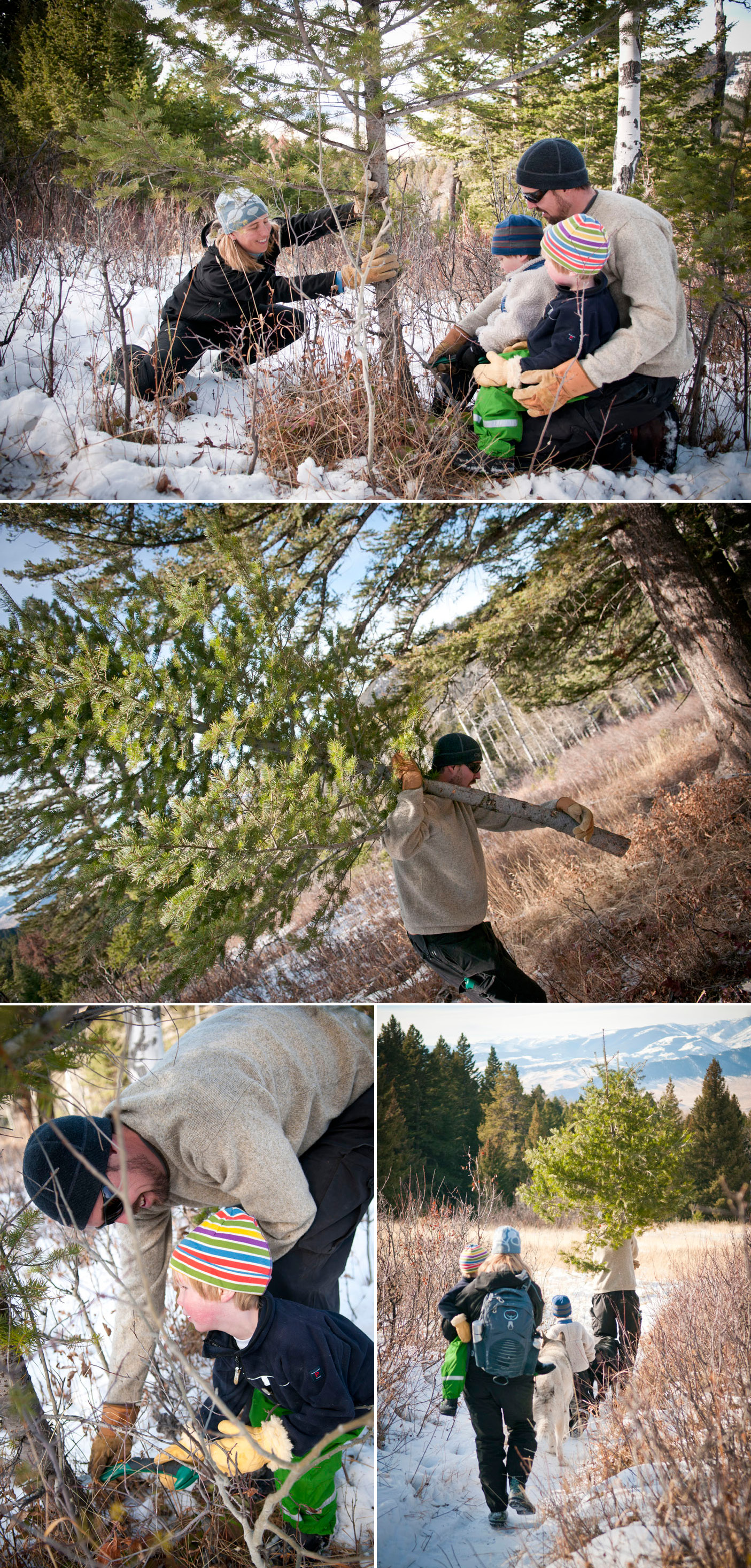 Tree Hunting Collage #3B